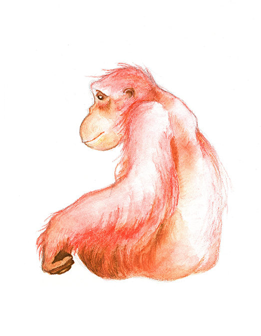 Elka, Orangutan Watercolor
