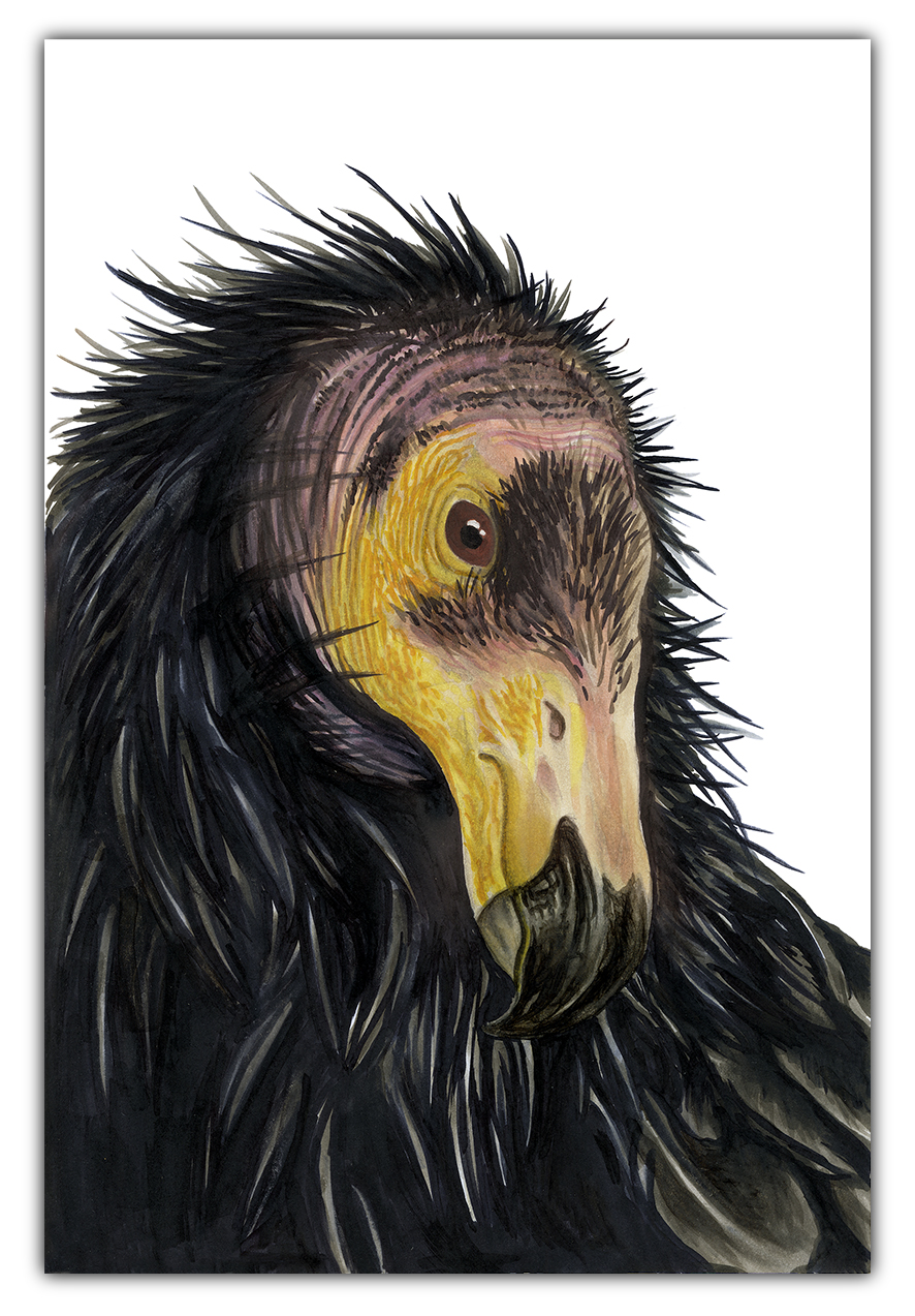 julie viens purifier II california condor copic marker drawing