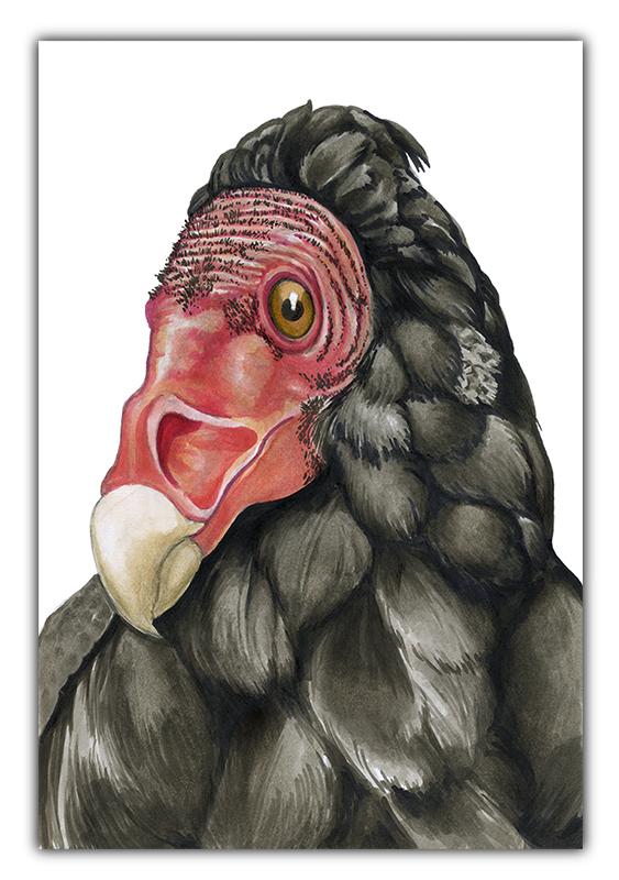 julie viens purifier turkey vulture copic marker drawing