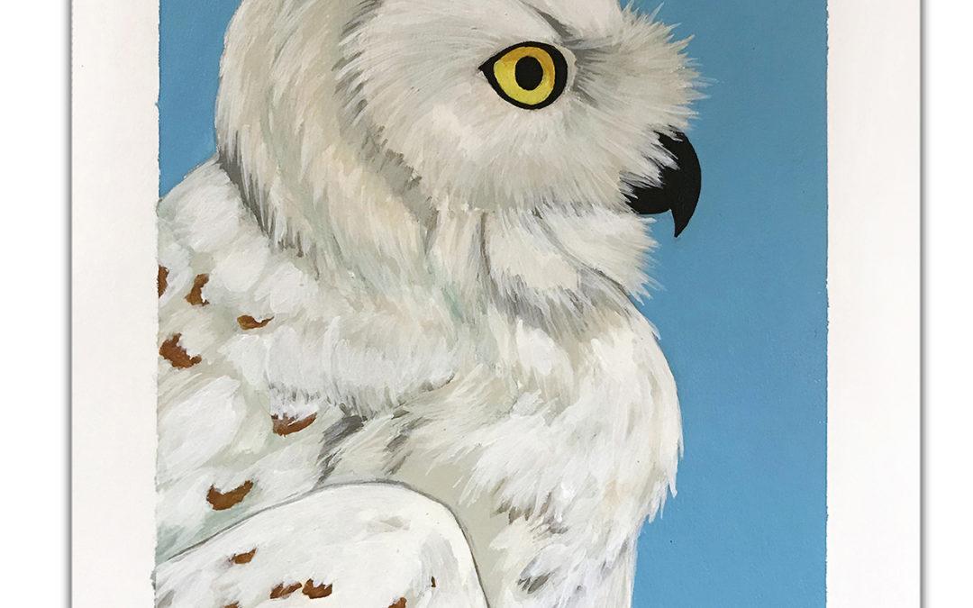 Study of a Snowy Owl